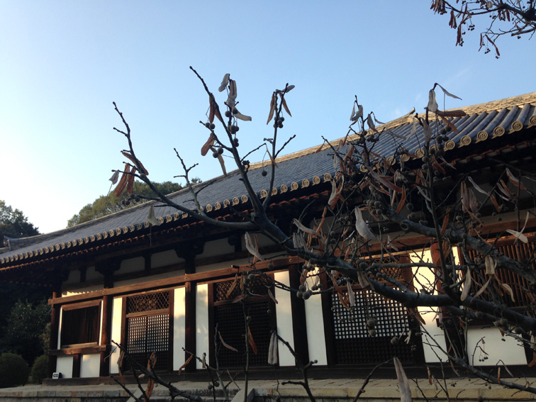 伎芸天様と菩提樹の木